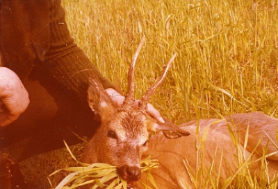 Roe-bucks Hunting  11.05-30.09